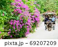 【沖縄県】 竹富島の水牛車 69207209