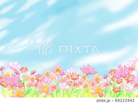 水彩で描いたコスモス畑のイラスト 69222942