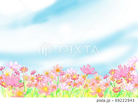 水彩で描いたコスモス畑のイラスト 69222943