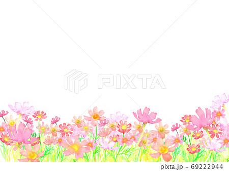水彩で描いたコスモス畑のイラスト 69222944