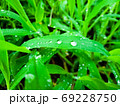 水滴をたたえる道端の草 69228750