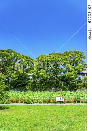 【神奈川県】緑が綺麗な小田原城址公園の蓮池 69233407