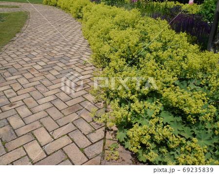 アルケミラモリスが脇に植えられたレンガの小道 69235839