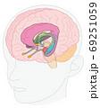 頭部 脳の図解 大脳辺縁系 名称なし 69251059
