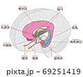 脳の図解 大脳辺縁系 名称入り 69251419