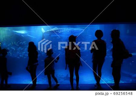 大水槽前でジンベエザメに見入る少女たち 69256548