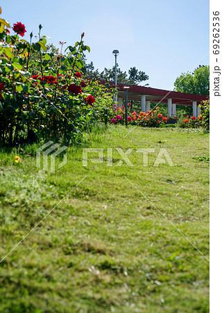 バラの咲く公園の風景・大阪服部緑地 69262536