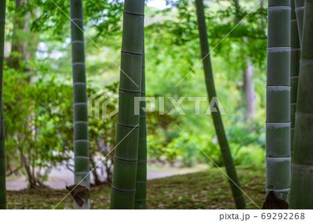 【自然素材】涼し気なイメージの竹林の風景 69292268