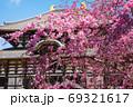 東大寺 大仏殿 金堂 桜 春 (奈良県奈良市) 2020年4月 69321617