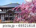 東大寺 大仏殿 金堂 桜 春 (奈良県奈良市) 2020年4月 69321618