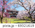 東大寺の春、桜と大仏殿/金堂(奈良県奈良市)2020年4月 69321619