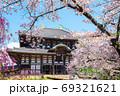 東大寺の春、桜と大仏殿/金堂(奈良県奈良市)2020年4月 69321621