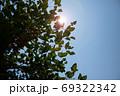 夏の空と木漏れ日 69322342