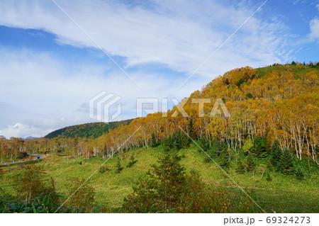 秋の志賀高原平床の白樺黄葉と笹原と青空雄大 69324273