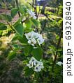Background Beautiful blooming bush of white flowers 69328940
