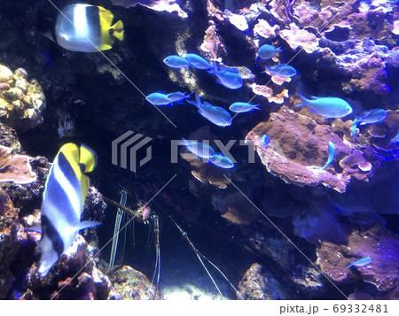 泳ぐ小魚の群れと隠れる伊勢海老 水族館 69332481