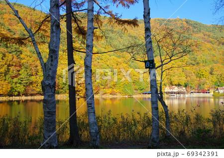 紅葉の四尾連湖(山梨県市川三郷町) 69342391