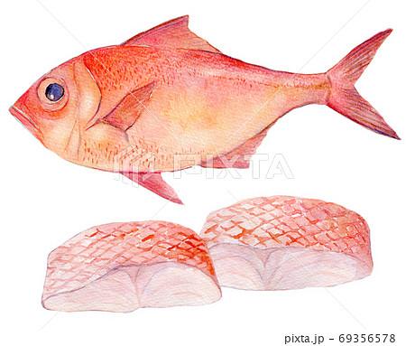 水彩イラスト 魚介 金目鯛 海鮮 69356578