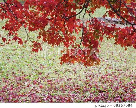 したたるような真っ赤な紅葉と落ち葉 69367094