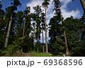 天宮神社境内の背の高い木々と森の入口 69368596