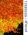 紅葉 69368921