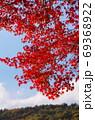 紅葉 69368922