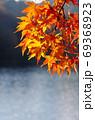 紅葉 69368923