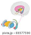 脳 大脳辺縁系 レンズ核 名称なし 69377590