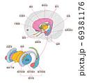 脳 大脳辺縁系 レンズ核 名称入り 69381176