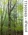 大台ヶ原の原生林 69400411