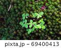 苔マットの新芽 69400413