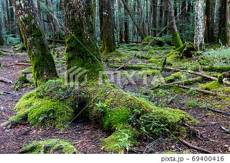 苔生す北八ヶ岳の森 69400416