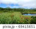 夏の八甲田睡蓮沼とガマズミ 69415651