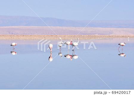 フラミンゴ(Los Flamencos National Reserve、チリ) 69420017