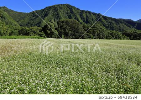 白い花咲く明るいソバ畑 福島県只見町 69438534