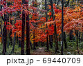 雑木林の中の赤く染まる小路 69440709
