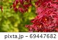 紅葉イメージ 69447682