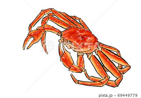 ズワイガニの手描きのイラスト 松葉蟹 越前蟹 蟹 69449779