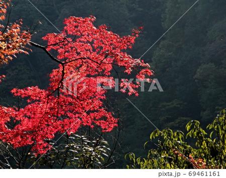深い谷底で、そこだけ輝く秋の紅葉 69461161