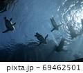下から見たペンギン 69462501