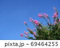 サルスベリと雲一つない青空 69464255