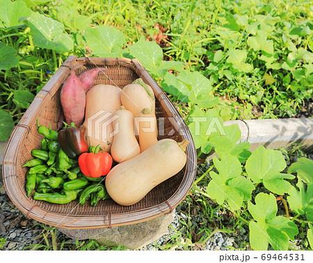 家庭菜園の収穫 69464531