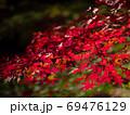 原不動滝公園の紅葉・ライトアップ(兵庫県) 69476129