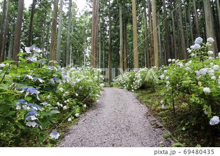みちのくあじさい園の紫陽花と遊歩道 69480435