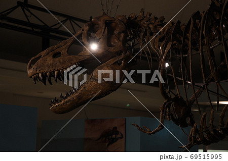 哀愁の恐竜 69515995