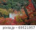 紅葉 京都 永観堂 5 69521957
