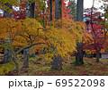 紅葉 京都 永観堂 8 69522098
