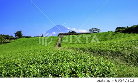 富士と茶畑で有名な今宮の茶畑(夏) 69547312