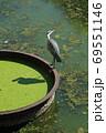 東京の中心・北の丸公園清水濠に生息する水鳥 69551146