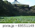 北の丸公園・牛ケ淵の蓮群生と日本武道館 69551149